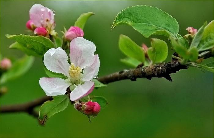 Spring in The Air/Khung trời mùa Xuân