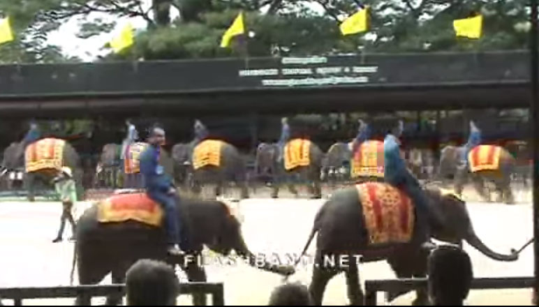 Voi biểu diễn thật ngoạn mục/Funny and Cute Elephants
